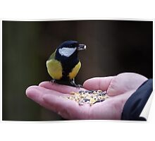 Feeding the Great Tit Poster