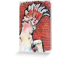 Major Mitchell's Cockatoo Greeting Card