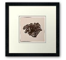 Plant Form 76 Framed Print
