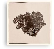 Plant Form 76 Metal Print