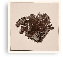 Plant Form 76 Canvas Print