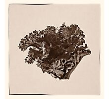 Plant Form 76 Photographic Print