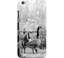 Greylag geese walking past iPhone Case/Skin
