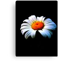 Daisy - alone (2013) Canvas Print