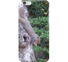 squirrel iPhone Case/Skin