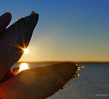Sunrise In A Clam Shell | Northwest Harbor, New York  by © Sophie W. Smith