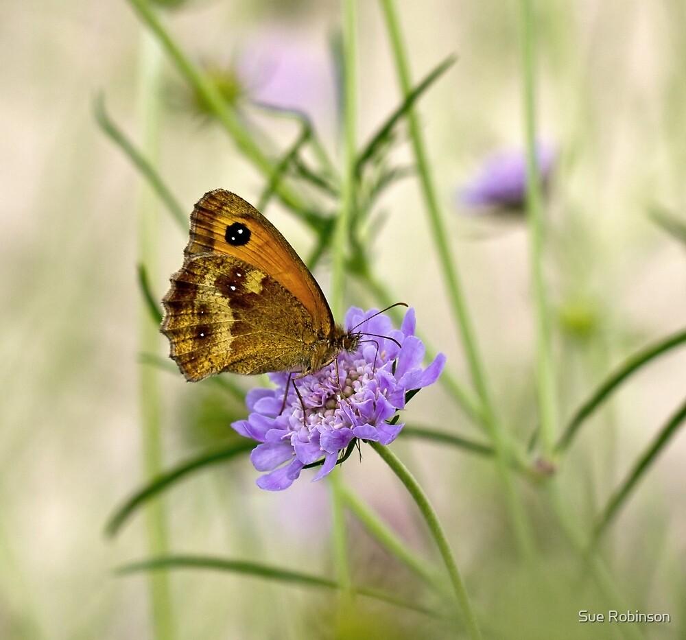 Gatekeeper Butterfly by Sue Robinson
