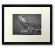 Hugging bearded dragons Framed Print