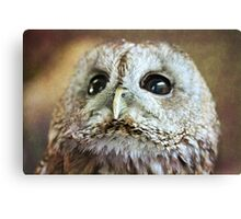 Cuddles Looking Up Canvas Print
