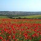 Poppy Field and Brighton by Sue Robinson
