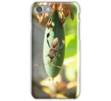 Leaf Footed Bug on Taxo Fruit iPhone Case/Skin