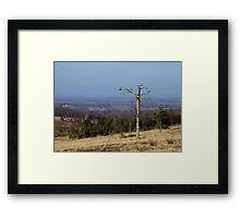 Lone Tree on Ashdown Forest Framed Print