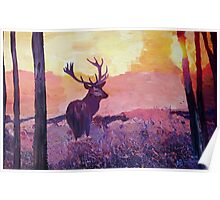 Deer in the winter sunet Poster