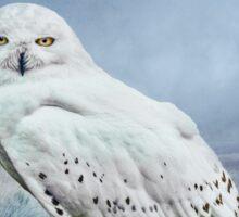Snowy Owl in mist Sticker