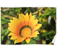 Yellow and Green Wildflower Poster