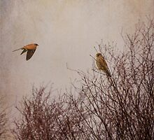 Kestrels by M.S. Photography/Art