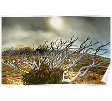 Burnt snowgum and regrowth Poster