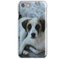 Stray Dog Lying on a Sidewalk iPhone Case/Skin