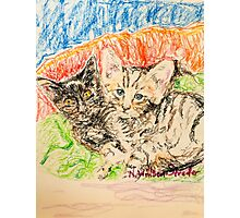 Two Kittens Photographic Print