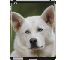 Working Dog Portrait iPad Case/Skin