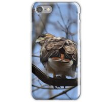 Red-tailed Hawk III iPhone Case/Skin