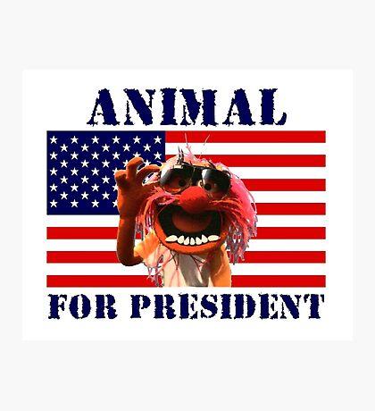 Animal for President Photographic Print