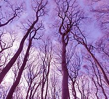 forest sky by SARiSON