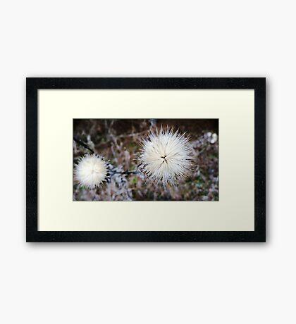 White Star . Framed Print