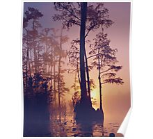 swampy sunset Poster