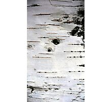 Birch Tree Bark  Photographic Print