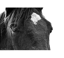 Looking into the Eyes of a Rescue Horse Photographic Print