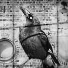 Currawong Calling by Clare Colins