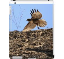 Red Tail Hawk Glides Hillside iPad Case/Skin