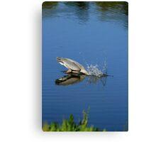 Great Blue Heron Making A Splash Canvas Print
