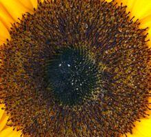 sunflower idk Sticker