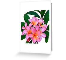 Pink Frangipani Flowers Photograph Greeting Card