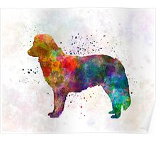 Nova Scotia Duck Tolling Retriever in watercolor Poster