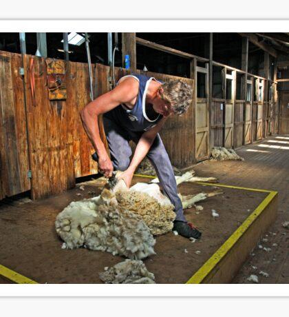Sheep shearing at Shear Outback Sticker