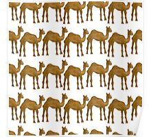 Cute camel Poster