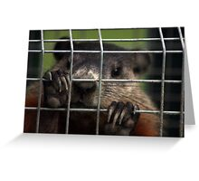 Relocated Groundhog. Greeting Card