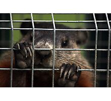 Relocated Groundhog. Photographic Print
