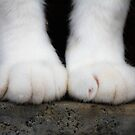 Fluffy Cat Paws by Qnita