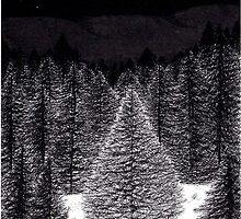 Pen and Ink Forest Scene by newjerseygirl13