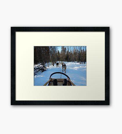 Winter Husky Sleigh Ride Framed Print