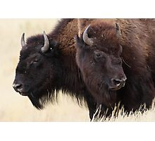Bison Friendship Photographic Print