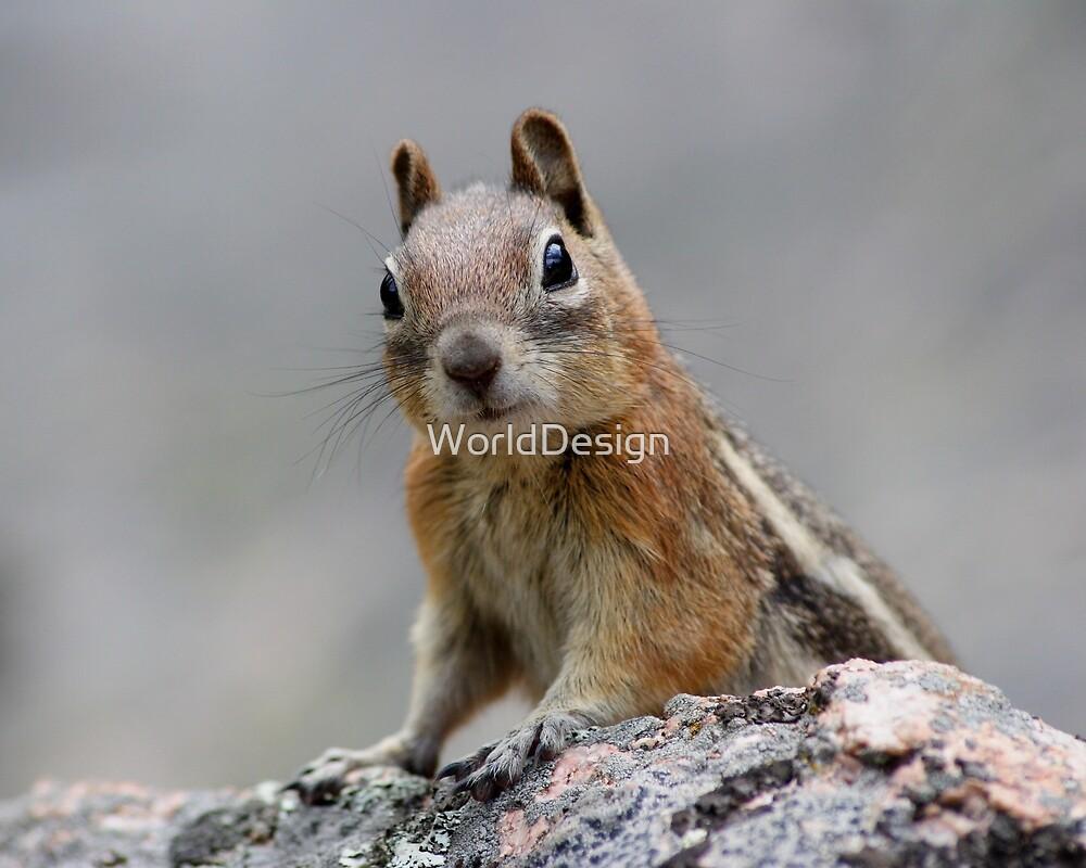 Ground Squirrel on Stage by William C. Gladish
