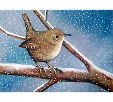 Bird in Snow, Little Wren, Original Oil Pastel Wildlife Art Photographic Print