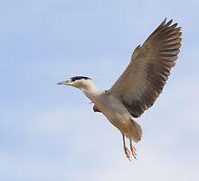 Nigh-Heron Landing Prep by DWMMPhotography