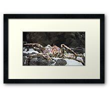 jaws of a giant crab Framed Print