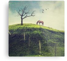 Horse on a Colombian Hillside Metal Print